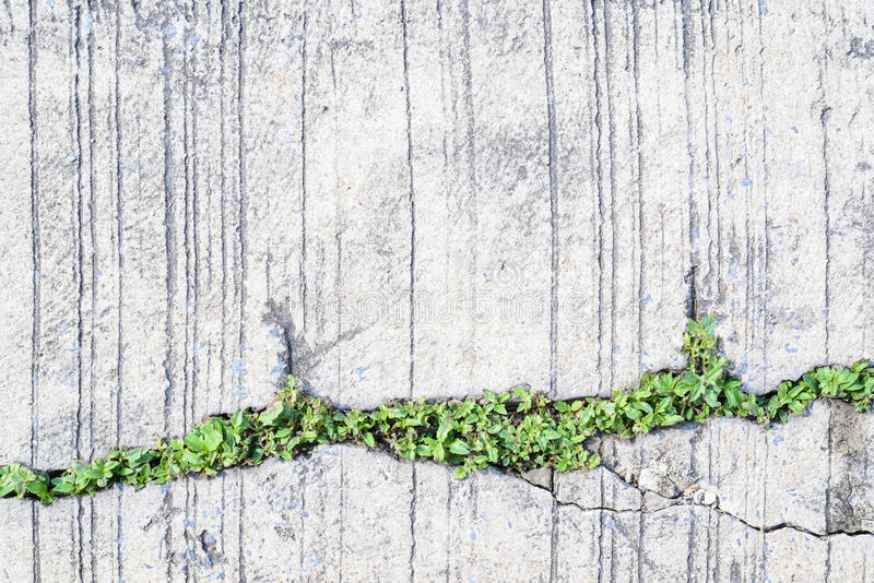 Tree growing on the crack concrete floor.  royalty free stock image
