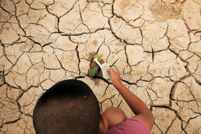 A tree growing on cracked ground. Crack dried soil in drought, Affected of global warming made climate change. Water shortage. A tree growing on cracked ground stock image