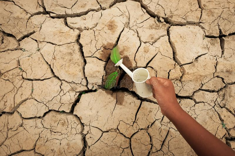A tree growing on cracked ground. Crack dried soil in drought, Affected of global warming made climate change. Water shortage. A tree growing on cracked ground stock images
