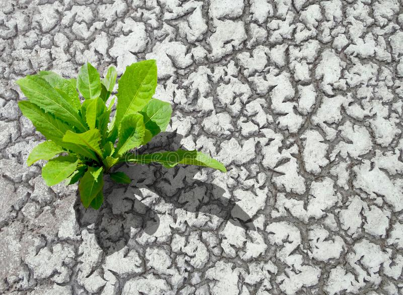 A tree growing on cracked ground. royalty free stock photo