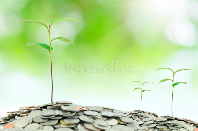 Tree growing on moneys. With green background royalty free stock images