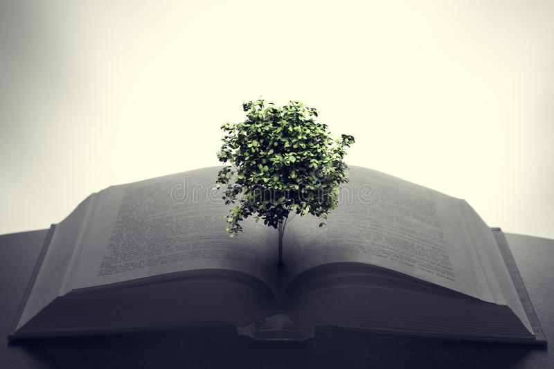 Tree growing from an open book. Education, imagination, creativity. Concept stock photography