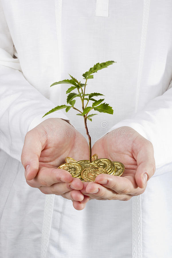 Download Tree Growing Out Of Coins Royalty Free Stock Photography - Image: 25042377