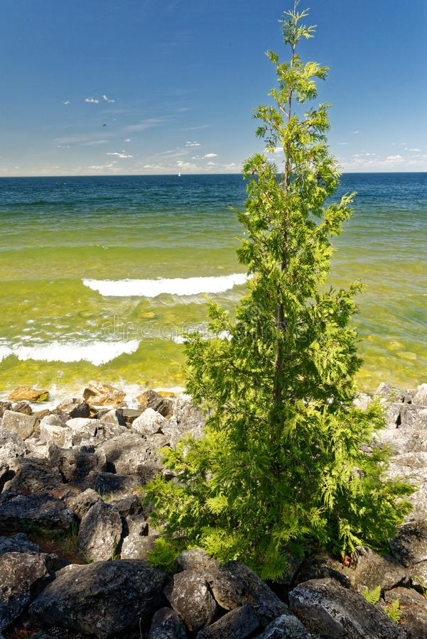 Tree growing out of rocks along Lake Michigan shoreline on a sunny summer afternoon stock photography