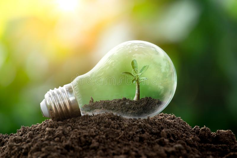 The tree growing on the soil in a light bulb. Creative ideas of earth day or save energy and environment concept royalty free stock photo