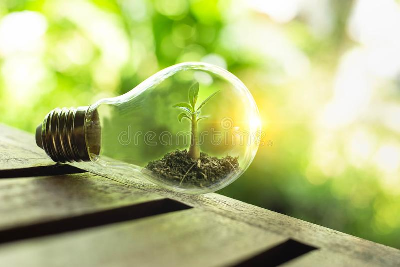 The tree growing on the soil in a lightbulb. Creative ideas of earth day or save energy and environment concept stock image