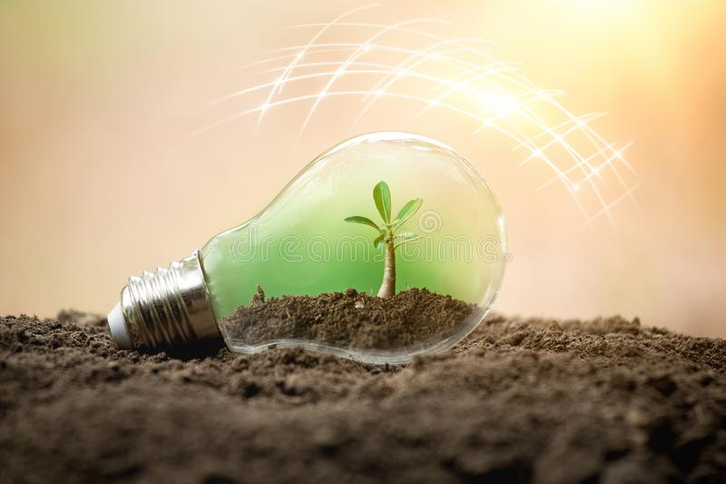 The tree growing on the soil in a light bulb. Creative ideas of earth day or save energy and environment concept. Protection of royalty free stock photos