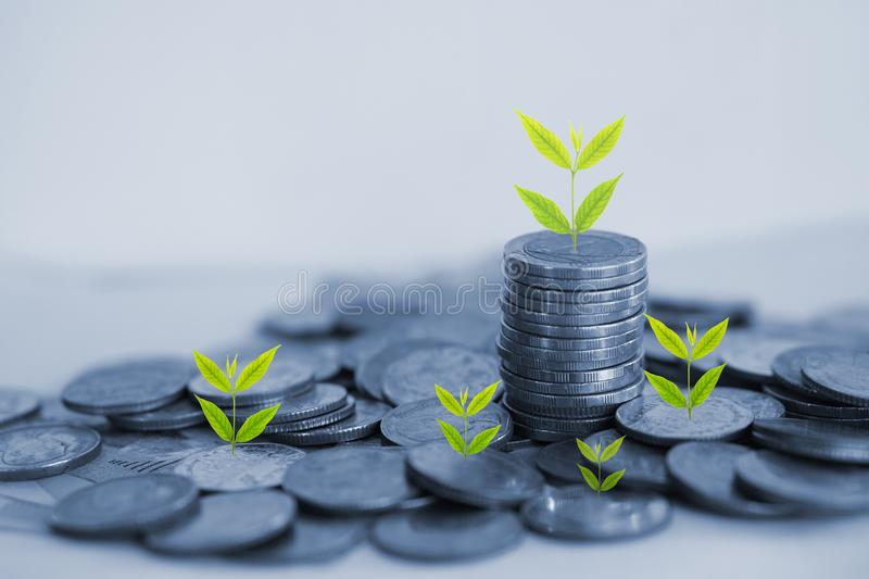 Tree growing on stack of coin, business growth and success concept royalty free stock photography