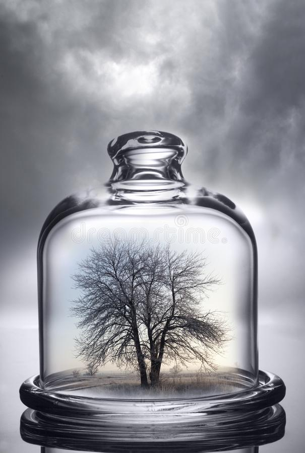 Tree growing under a glass dome on cloud background. Environment stock images