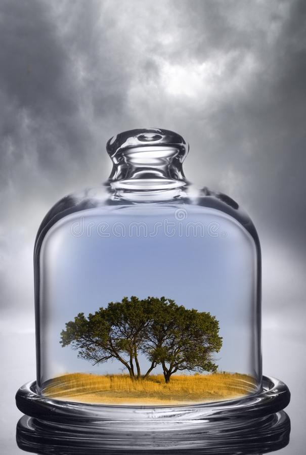 Tree growing under a glass dome on cloud background. Environment royalty free stock photo