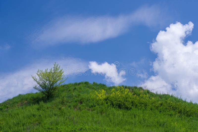 Lonely tree on a hill under a blue sky stock images