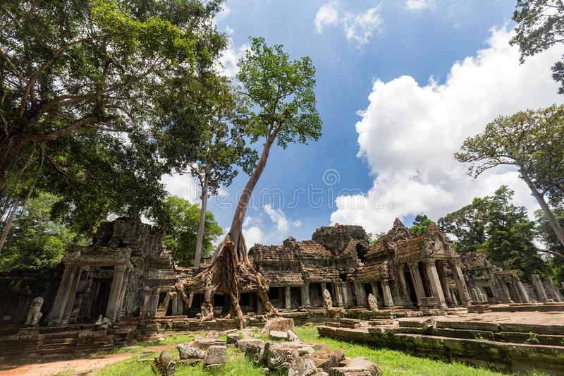 Preah Khan. A Tree grows out of the remains of the Preah Khan Temple in Siem Reap, Cambodia royalty free stock image