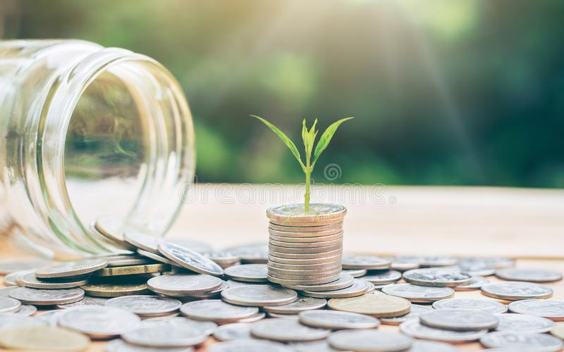 The tree grows on silver, coins and glass jars pouring coins. denotes business growth. royalty free stock photography