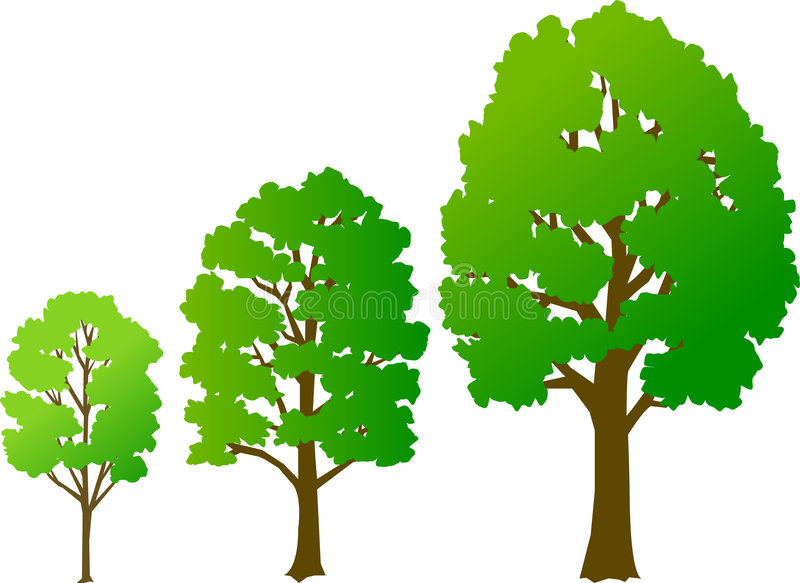 Tree Growth/eps. Three illustrations of a tree at differents stages of growth