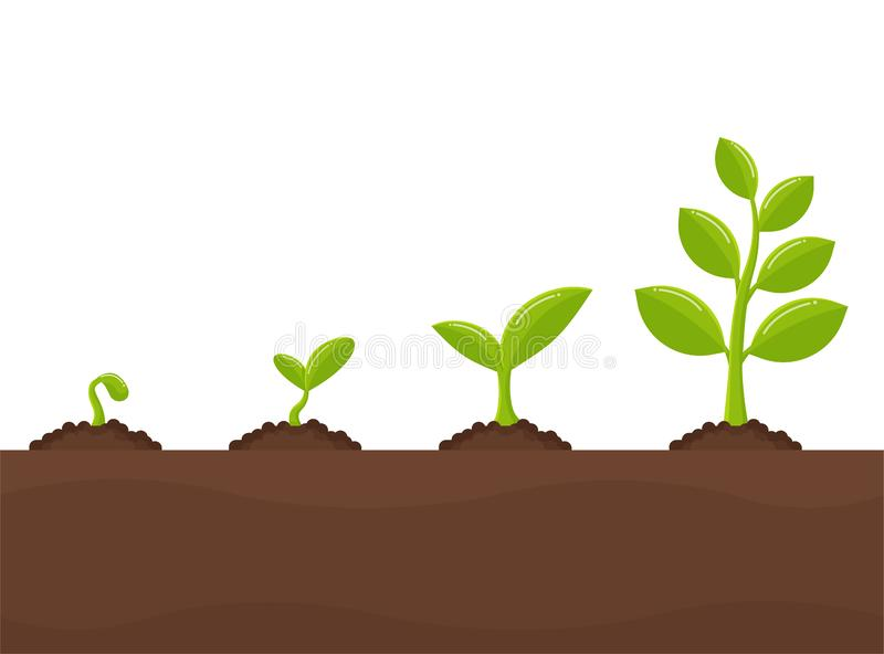 Tree growth Planting trees that sprout from seeds become a big seedling royalty free illustration
