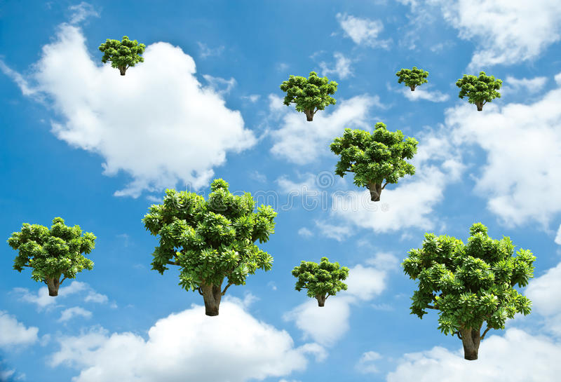 Tree growth on sky.Ecology concept.  royalty free stock image
