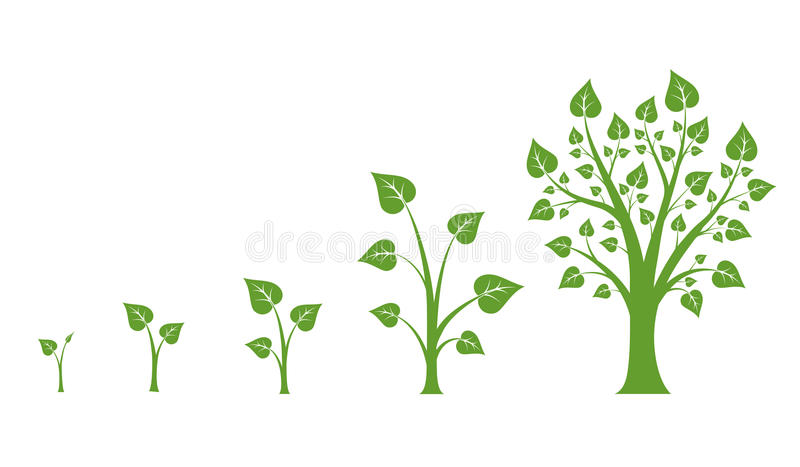 Tree growth vector diagram. Green tree growth, nature leaf growth, plant growh illustration royalty free illustration