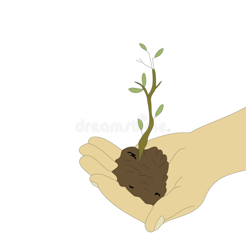 Tree in Hand. A small tree grows from a isolated hand over pure white background royalty free illustration