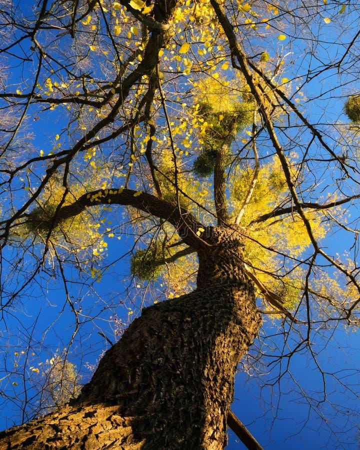 Tree hand stock image