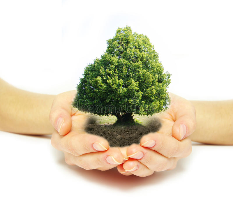 Download Tree in hands stock image. Image of plant, grow, sand - 21440683