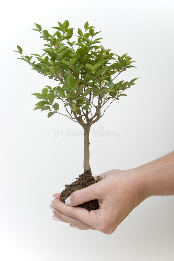 Tree in hands stock image