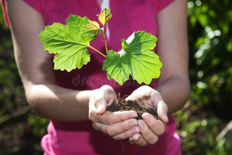 Tree in hands stock photos