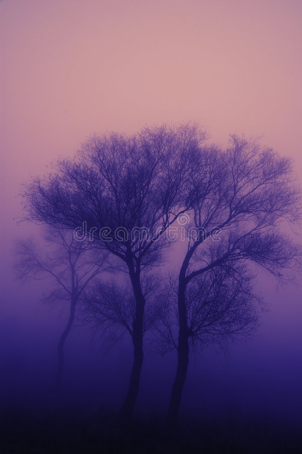 Download Tree in heavy fog stock photo. Image of heavy, peace, scenic - 3896568