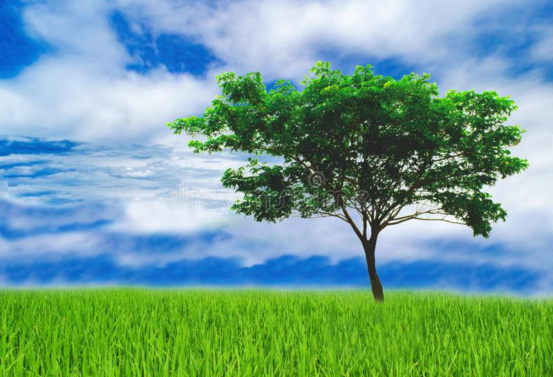 Tree helps reduce the global warming. Green tree help reduce the global warming, love the world love trees, earth Day concept please join us for the future royalty free stock photo
