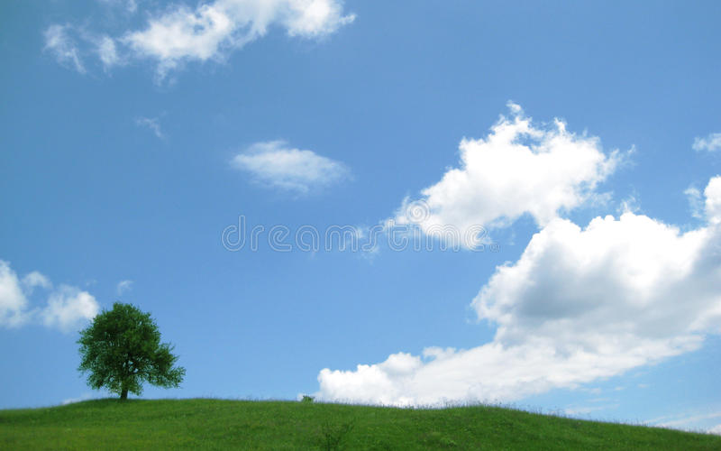 Tree on the Hill royalty free stock photography
