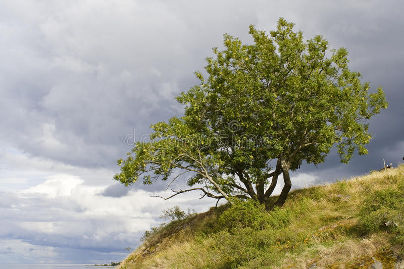 Tree on a hill stock photo