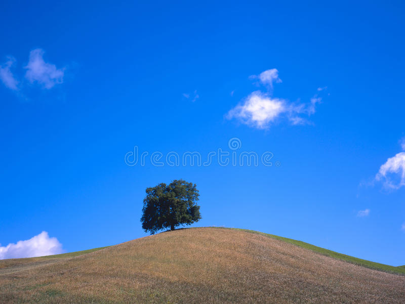 Download Tree at a hill stock photo. Image of loneliness, hilltop - 12255492