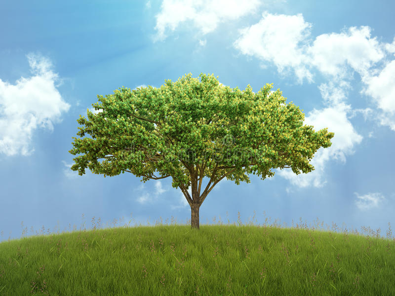 Download Tree On A Hill Royalty Free Stock Image - Image: 24077826