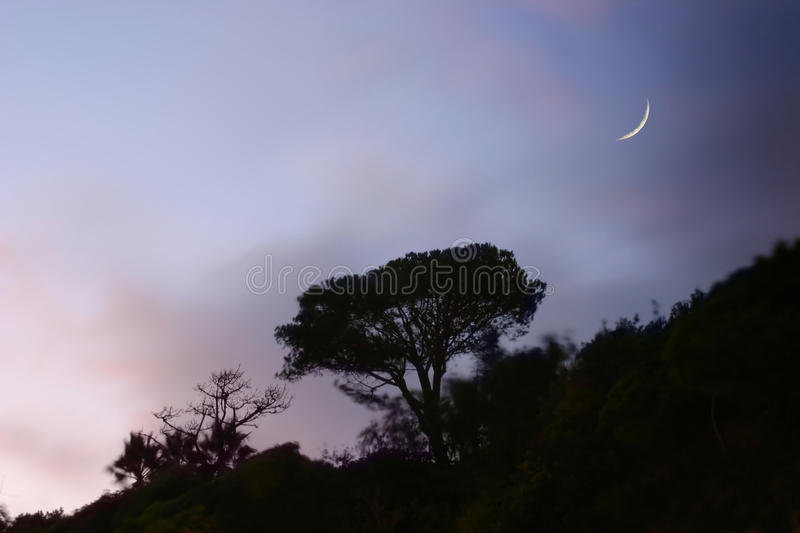 Download Tree on hill stock image. Image of color, dawn, clouds - 24721813