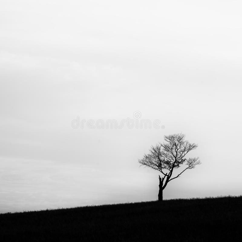 Tree on a hill abstract. Lone tree on small hill in black and white with high contrast royalty free stock photos