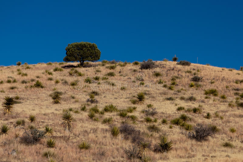 Tree on a hill. A lone tree on a hill in a desert stock image