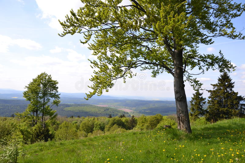 A tree on a hill royalty free stock photography