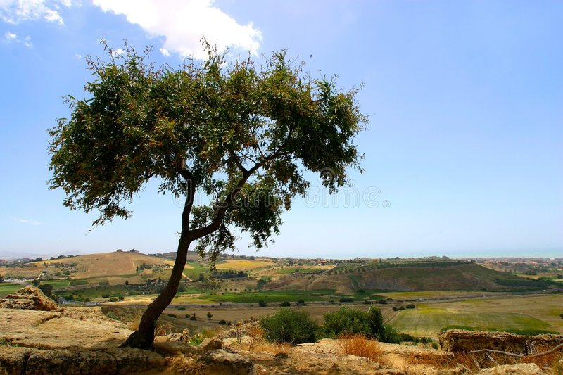 Download Tree on hill top stock photo. Image of farmland, sicily - 18780