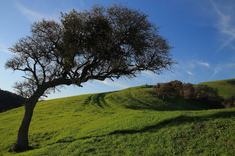 Tree on a hillside stock image