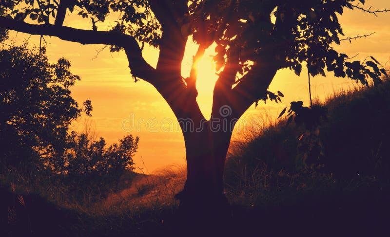 Tree On Hillside At Sunset Free Public Domain Cc0 Image