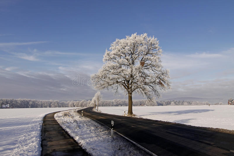 Tree with hoarfrost stock images