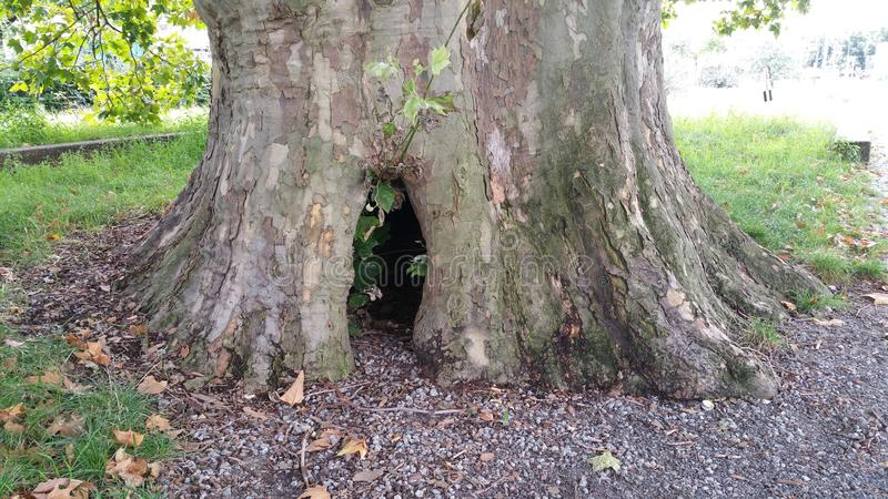 Tree hole. Tree, hole, entrance, animal, mystical stock images