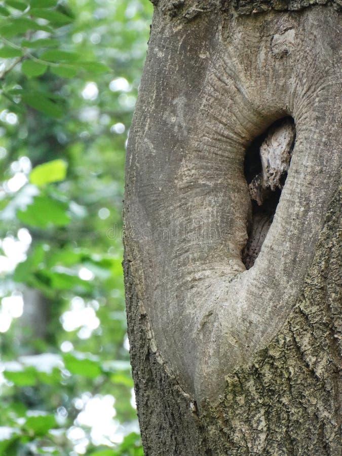 Tree hole royalty free stock image