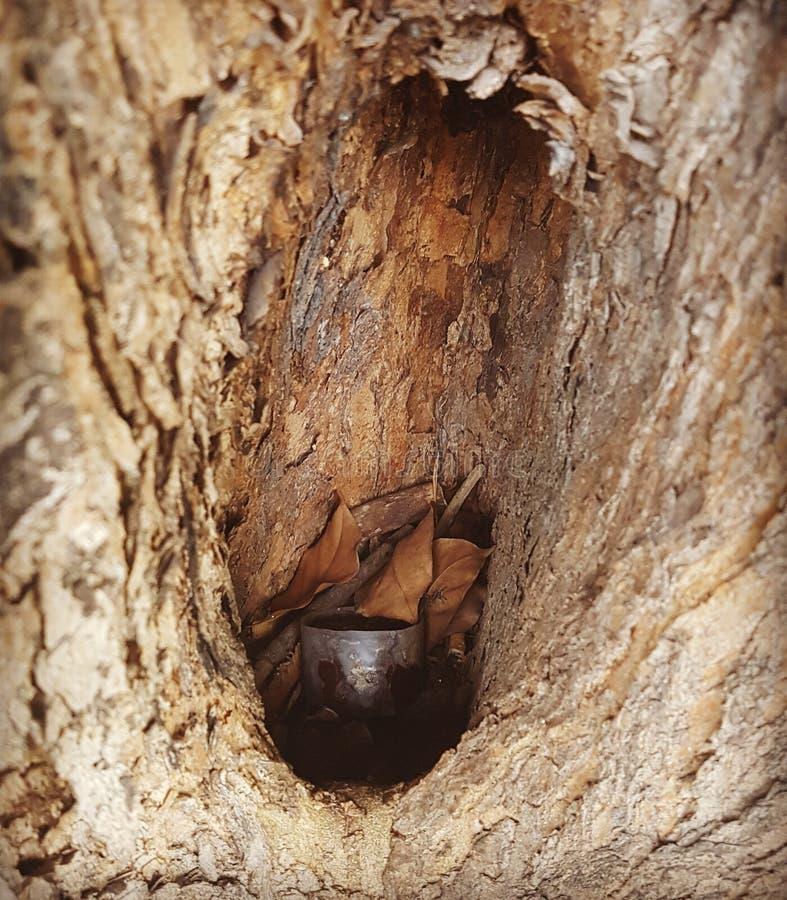 Tree hole royalty free stock photography