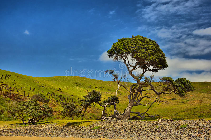 Tree - Hole in the wall. Tree at the Hole in the Wall, Transkei, Eastern Cape, South Africa royalty free stock image
