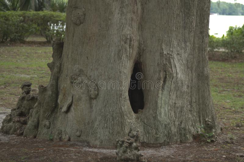Tree hollow in a Central Florida park overlooking a lake. royalty free stock image