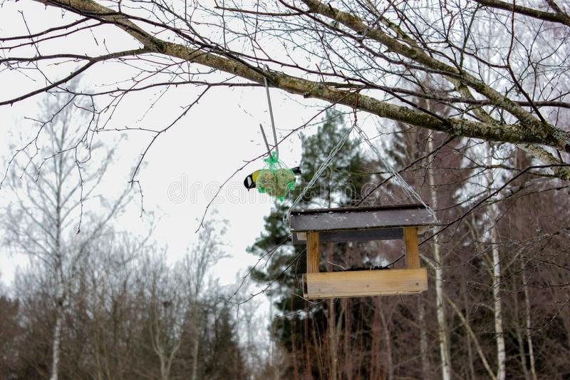 A view of feeder/ nesting box with little bird in a forest in winter day in Latvia. Tree Hook Hanger for Bird Feeders help birds to stay alive during cold winter royalty free stock photo