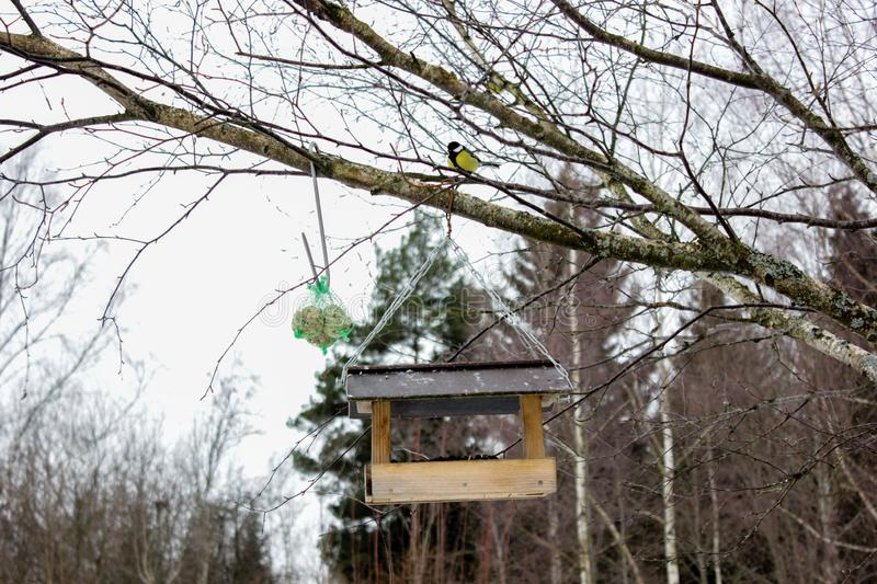 A view of feeder/ nesting box with little bird in a forest in winter day in Latvia. Tree Hook Hanger for Bird Feeders help birds to stay alive during cold winter stock photography