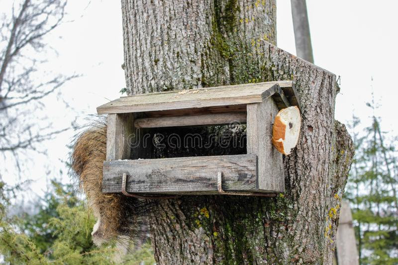 A view of feeder/ nesting box with little bird in a forest in winter day in Latvia. Tree Hook Hanger for Bird Feeders help birds to stay alive during cold winter stock photos