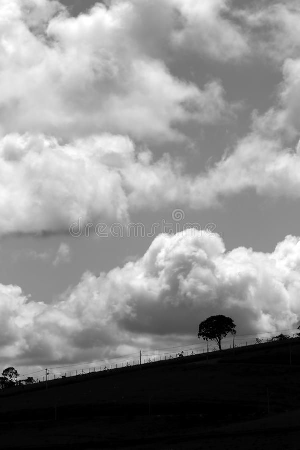 Tree on the horizon in black and white. Tree on the horizon, cropped out in the sky with white clouds, in black and white stock images