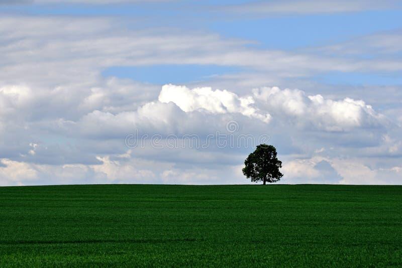 Tree on the horizon stock photo